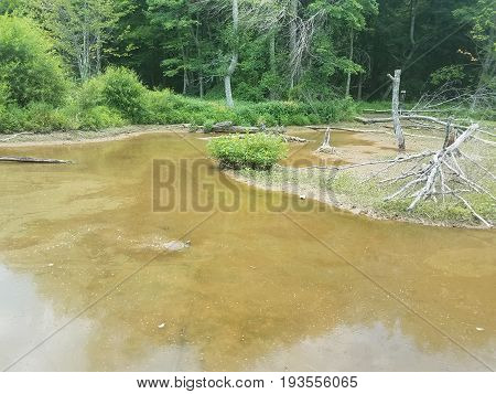 water and mud and turtle in wetland area