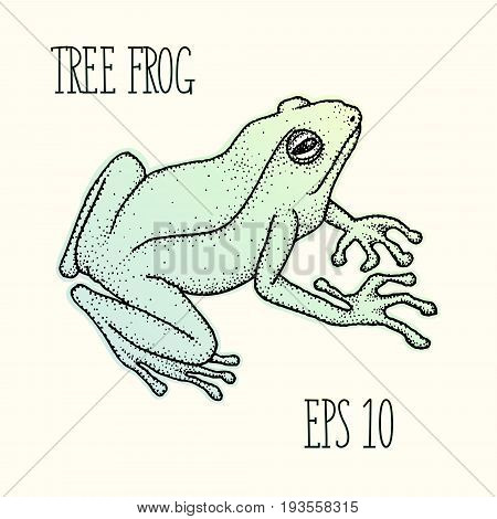 Realistic tree frog ink hand-drawn vector illustration