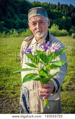 Romantic senior gentleman extends a cornflower bouquet and smiling. Looking at the camera. Elderly man holding wildflowers in the meadow. Focus on the face of senior man.