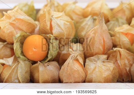 Cape gooseberry brown autumn crops with one disclose leaf to see the fruit inside.