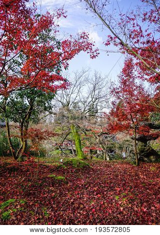 Autumn Scenery In Kyoto, Japan