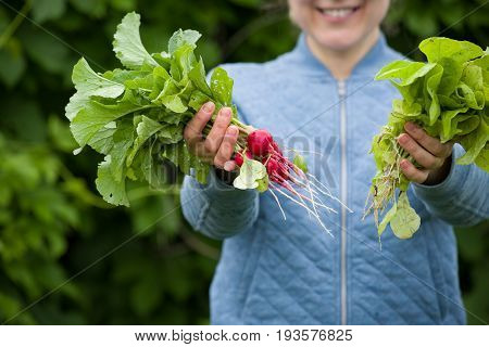 Closeup of woman's hand holding bunch of organic radish and lettuce from the garden. Organic vegetables. Farmers hand with freshly harvested vegetables and herbs. Healthy food and lifestyle concept