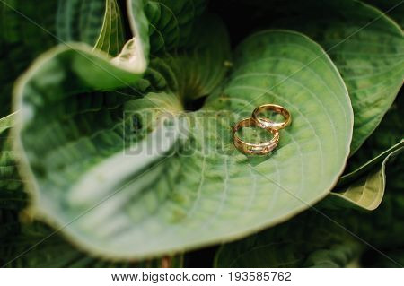two gold wedding rings on large green leaves