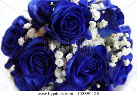 Bouquet Of Blue Roses On White