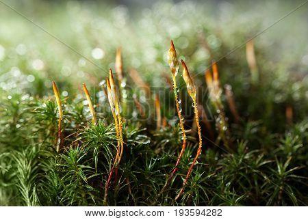 Moss And Seta