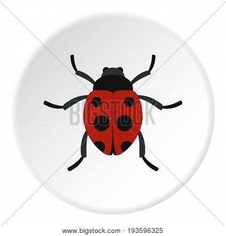 Ladybug icon in flat circle isolated vector illustration for web