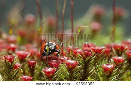 Blossom Moss And Ladybug Portrait
