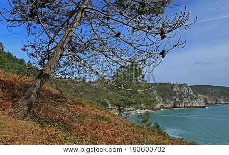 Coast of Brittany at Ile Vierge Finistere, Brittany, France