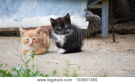 three shy timid homeless kittens red black and gray on the backyard look at the camera