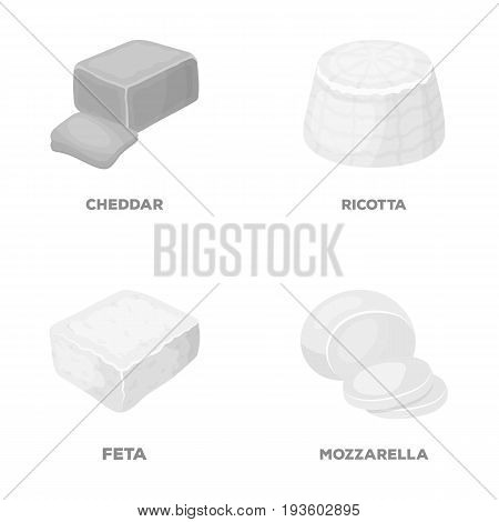 Mozzarella, feta, cheddar, ricotta.Different types of cheese set collection icons in monochrome style vector symbol stock illustration .