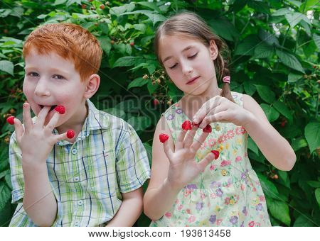 Happy children eating raspberries from fingers in summer garden. Redhead funny boy and girl, sister and brother having fun outdoors in berry cane. Healthy food for kids