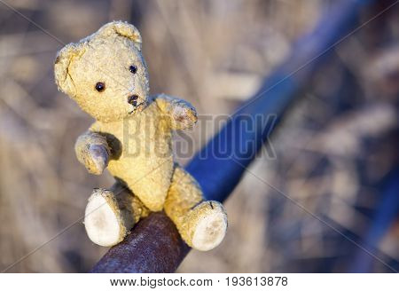 Toy bear as giving his paw - hope concept