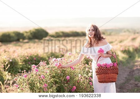 Smiling beautiful girl 24-29 year old wearing white dress holding basket with roses outdoors. Looking at camera. Rose field. 20s.