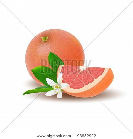 Isolated colored group of grapefruits slice and whole juicy fruit with white flower green leaf and shadow on white background. Realistic citrus