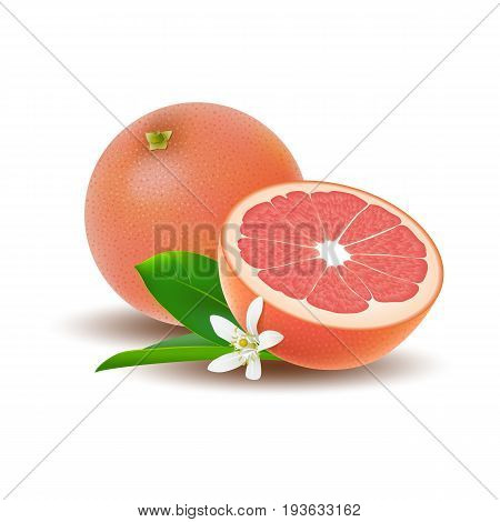Isolated colored group of grapefruits half and whole juicy fruit with white flower green leaf and shadow on white background. Realistic citrus
