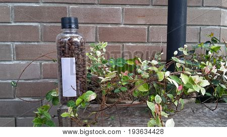 coffee bean in transparent bottle on the flowerpot
