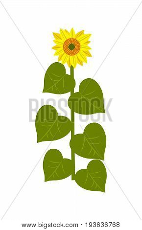 Sunflower stalk icon. Agricultural farming, natural harvest vector illustration isolated on white background.