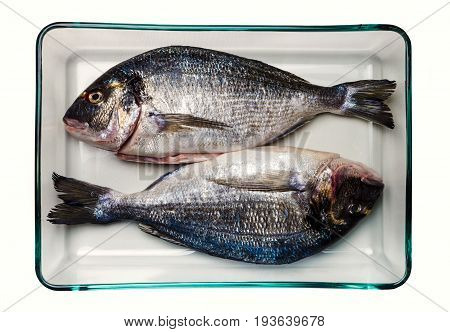 Gilt-head bream fish. Healthy food. Two sea bream in a glass container. On white background. Seen from overhead.