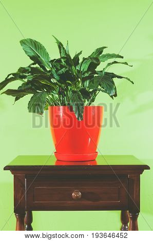House flower in red flowerpot on the old chest of drawers against soft green wall. Vertical. House flowers. Artistic. Indoor decoration.