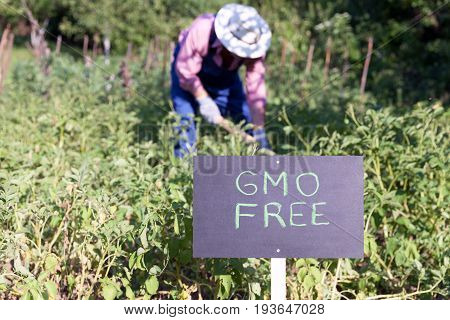 Farmer working in the GMO free vegetable garden