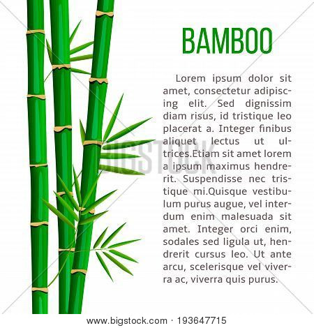 Fresh bamboo tree and leaves. vertical stripe and description text. for cosmetics, ointments, perfumery, label, decoration, banner, advertising, prints, poster, label, wrapping, postcard, invitation