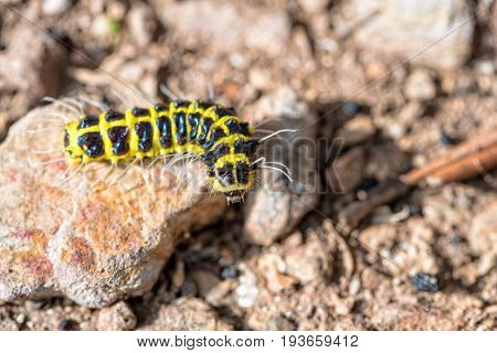 Closeup journey of the little worm with a black and yellow on the rock are finding their way on the ground under the sunlight