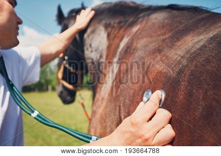 Veterinarian during medical exam (listening to heartbeat and lung) of the horse.