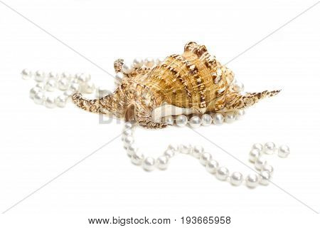 Women wedding jewelry. Long strand of pink river pearls. Collection of natural wedding pearls beads. Macro photo isolated on white background. Beautiful decorative exotic sea shell