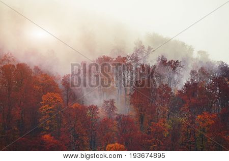 Silhouettes of autumnal mountains with trees in fog. Smog autumn mysterious landscape.