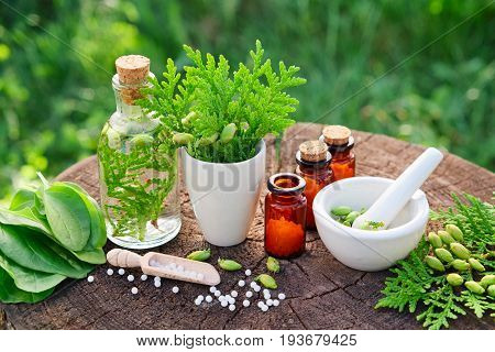 Bottles Of Homeopathic Globules, Thuja Occidentalis, Plantago Major Drugs And Mortar. Homeopathy Med