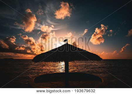 Wide angle shooting of stunning beautiful sunset on Indian ocean near Maldives resort with silhouette of beach sunshade in centre and heron standing on it beautiful cloudscape and gradient on sky