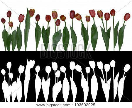 Photorealistic 3d illustration of tulips with alpha channel for easy selection and editing