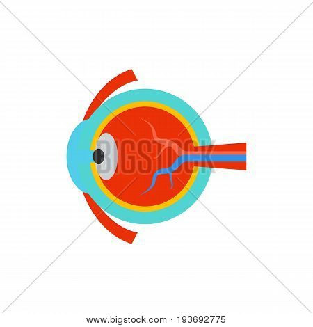 Icon of eye anatomy. Iris, looking, cornea. Oculist concept. Can be used for topics like vision, ocular research or eyeball