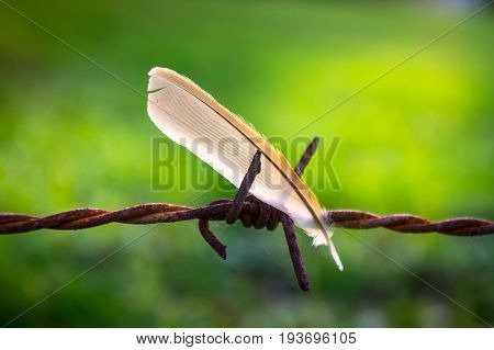 Harshly and gently, The scene of a soft feather left on a rusty wire-fence is representing the concept of  love, care, and embracing - Stock Photo