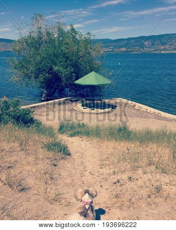 Small dog on leash looking at scenic view with water and mountains behind green umbrella with table and seats.