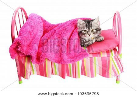 Little kitty laying on a smalle  pink toy bed