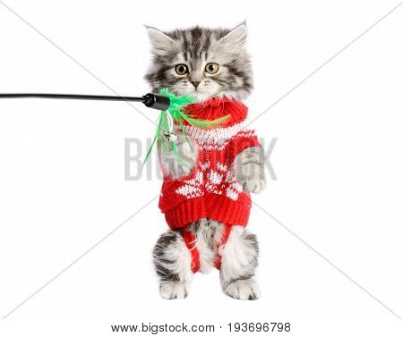 Little kitty with red dress  playing with a toy