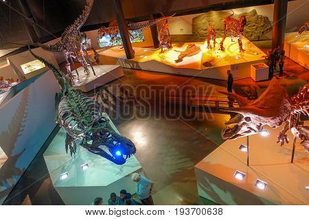 HOUSTON, USA - JANUARY 12, 2017: Unidentified people walking around of the fossil dinosaurs exposition in National Museum of Natural Science in Orlando Houston in USA, in a black background.