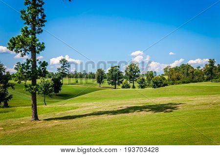 Golf course with green grasses, blue skies and puffy white clouds.  Scenic views of recreational sport golf course.