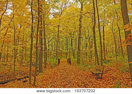 Quiet Forest Path in the Fall in the Morton Arboretum in Illinois