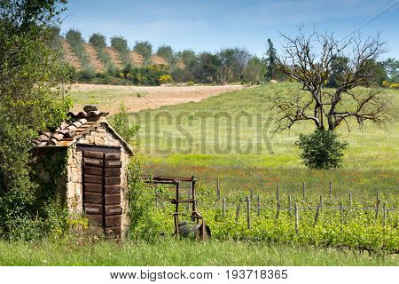 Small vineyard and old shed near San Antimo in Tuscany Italy