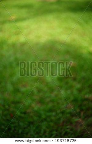 Blurred Image, Green Grass Turf