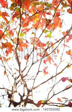 Abstract Blur Autumn Background