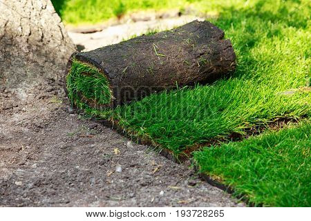 The stacking of roll green lawn grass