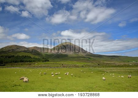 View of the Beinn na Caillich mountain (Red Cuillin Hills) from the road between Broadford and Torrin with sheep in the foreground, Isle of Skye, Highlands, Scotland, UK