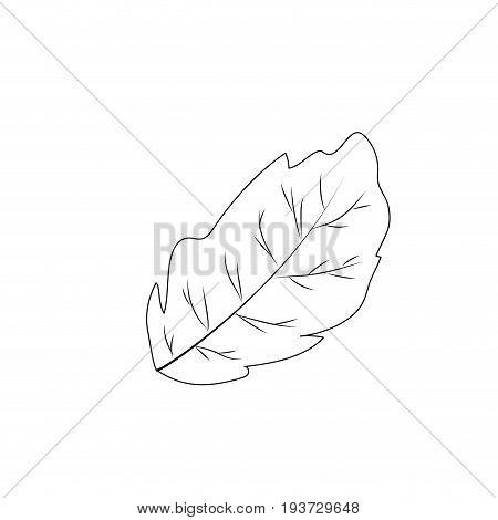 line leaf plant and natural condiment vector illustration