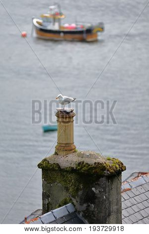 Close-up on a seagull perched on a roof overlooking Portree fishing harbor, Isle of Skye, Highlands, Scotland, UK