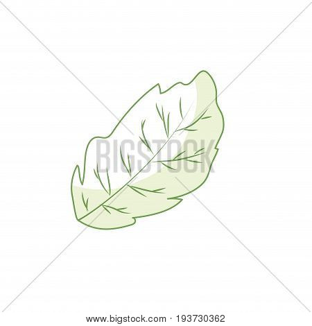 silhouette leaf plant and natural condiment vector illustration
