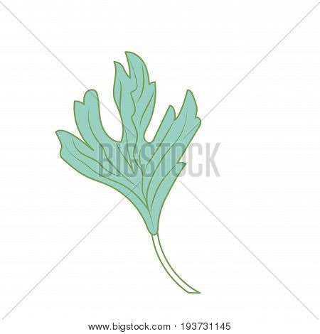 coriander herb to natural condiment of food vector illustration