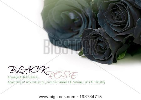 Black roses bouquet with sample text on white background